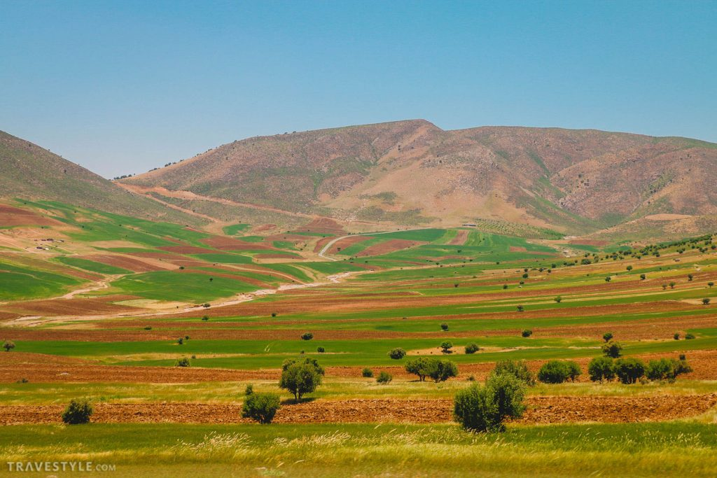 Fields peppered with oak trees in Lorestan province